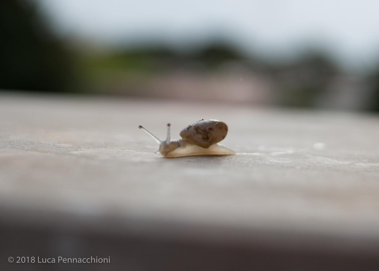 Mini snail!
